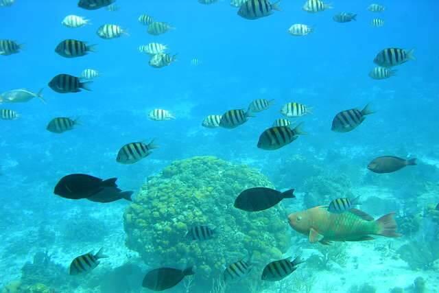 A 2h de Miami, 3 îles de rêve au large de Cancun 4